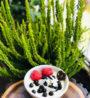 bezlepkovy vanilkovy pudink z hrasky IMG_5893